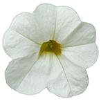 Calipetite Flowers